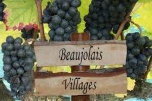 Beaujolais Wines